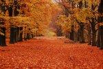 Autumn-Orange-Leaves-On-The-Road.jpg