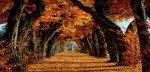 Nature-Trees-Autumn-Leaves-Path-Fall-Avenue-Orange-Leaf.jpg
